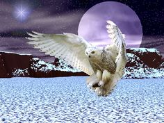 Snowy Owl Wallpaper | TOBFAV.COM