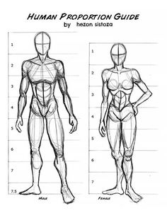 This human proportion guide shows you how to draw the human anatomy. These drawing ideas are perfect for anyone who wan'ts to practice drawing men and women. Drawing Body Proportions, Human Body Drawing, Human Sketch, Body Reference Drawing, Human Figure Drawing, Guy Drawing, Anatomy Reference, Drawing People, How To Draw Human