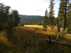 Hiking in page meadows/tahoe
