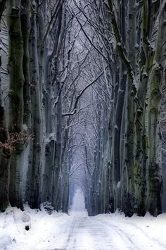 "bluepueblo: "" Snow Forest, Czech Republic photo via retirement """