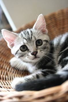 Kitty #cat #kitten