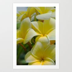 Yellow Plumeria  Art Print by tsuttles - $16.00