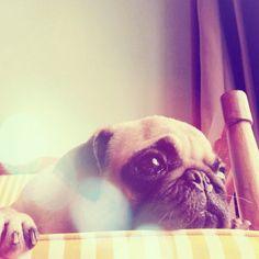 pakpak daydreaming