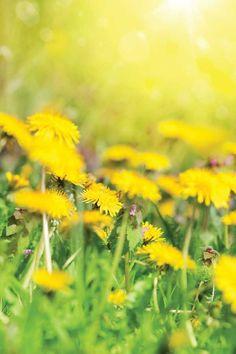 Backyard Bounty: 8 Useful Weeds - Gardening - Mother Earth Living