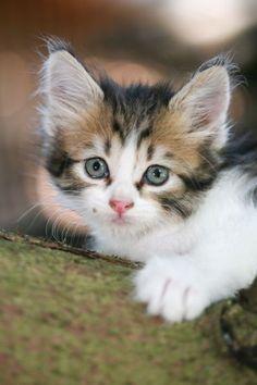 Beautiful!! I ❤❤❤ kitties!!!!!!