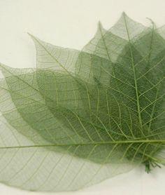 """Natural 3"""" Green Glitter Skeleton Leaves"""