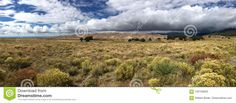 Panorama Of San Luis Valley Of Colorado Stock Photo - Image of golden, bush: 102195620 State Of Colorado, Beautiful Landscapes, Shrubs, Southern, Country Roads, San, Stock Photos, Mountains, Travel