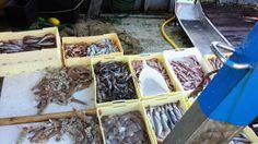 pesce fresco, fresh fish
