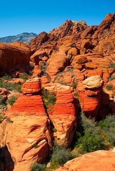 Just a short ride from the Las Vegas Strip, Red Rock Canyon feels a world away.  Great hiking... and memorable photos.  #DolceVitaLV #SummerBucketList #Vegas