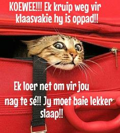 Good Night Wishes, Good Night Quotes, True Quotes, Best Quotes, Goeie Nag, Afrikaans Quotes, Special Quotes, Sleep Tight, Love You More