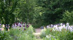 Wild garden. JPSacedon garden designer