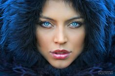 Blue eyes, Blue fur, Blue, Blue, Blue