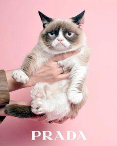 """O 1º perfume da Miu Miu chega nesse mês de setembro nas prateleiras lá de fora e a gente já sabia que a campanha seria estrelada pela atriz Stacy Martin, de """"Ninfomaníaca"""". O que a gente ainda não sabia é que Stacy divide a cena com um… gato! Ele se chama Truman e é uma gracinha, você não achou? Aproveitando esse gancho, decidimos homenagear o amor da Miuccia Prada pelos gatos – sim, ela é uma supergateira e já incluiu os felinos em estampa, em outras campanhas e até em cenário de desfile"""