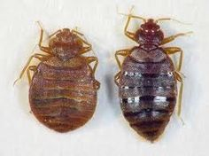 44 Best Bed Bug Exterminator Images Fanny Pics Funny Images