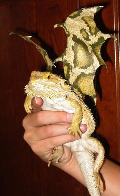 Wizard costume for bearded dragon dragon wizards and - Bearded dragon yawn ...