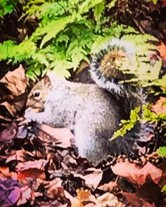 I met Tic in #hydepark signe: Tac ... #glm2017 #london #squirell