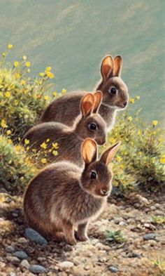 Limited edition prints by Andrew Hutchinson - Andrew Hutchinson - wildlife artist Wildlife Paintings, Wildlife Art, Animal Paintings, Animals And Pets, Baby Animals, Cute Animals, Bunny Art, Cute Bunny, Rabbit Pictures