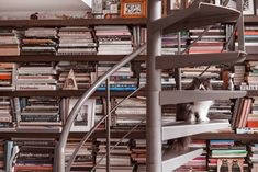 Grace Coddington's bookshelves. And cat.
