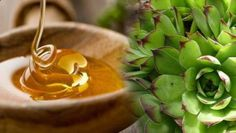 Ovarian Cyst Miracle - Houseleek and honey for fibroids and cysts More Than 157,000 Women Worldwide Have Been Successful in Treating Their Ovarian Cysts In 30-60 Days, and Tackle The Root Cause Of PCOS Using the Ovarian Cyst Miracle™ System!