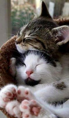 Cute Cuddle #Cats