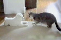 Cat Teaches Dog to Roll Over