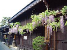 高山市三町伝統的建造物群保存地区 岐阜県 #商家町 #飛騨 #重要伝統的建造物群保存地区 #たかやましさんまち