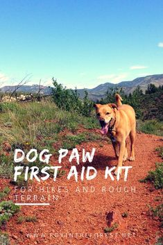 DIY Dog First Aid Kit for Camping and Hiking • Fox in the Forest