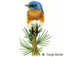 Hand Embroidery Kit - Eastern Blue Bird on Pine Branch Needle Painting Embroidery - Embroidery Art Picture Hand Embroidery Kits, Crewel Embroidery, Embroidery Thread, Embroidery Designs, Long And Short Stitch, Pine Branch, Brazilian Embroidery, Thread Painting, Embroidery Techniques
