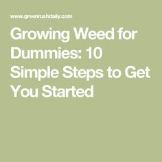 Growing Weed for Dummies: 10 Simple Steps to Get You Started Growing Weed, Cannabis Growing, Cannabis Oil, Cbd Oil For Sale, Medicinal Herbs, Hemp Oil, Medical Marijuana, You Got This, Paisajes