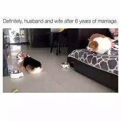 😂😂😂😂😂😂😂😂 Funny Dog Memes, Funny Video Memes, Funny Animal Memes, Funny Animal Videos, Funny Animal Pictures, Cute Funny Animals, Cute Baby Animals, Funny Cute, Funny Dog Gif