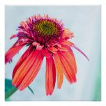 Tart Flower Poster  Tart Flower Poster  $19.95  by JessikaGosen  . More Designs http://bit.ly/2hyOutM #zazzle