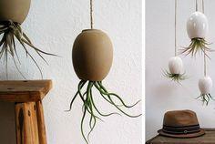 9 Idées pour créer une suspension de plantes simples et originale !