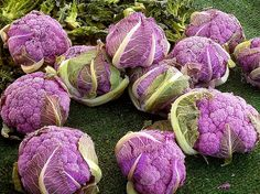 Organic Heirloom Purple Cauliflower  30 Seeds F26 by seedsshop, $1.79