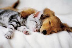 kat en hond - Google zoeken