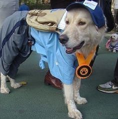Ready to delivery #dog #posts of #postman #mail #ems #dhl #fedex #dogshirt #costume #hat #pet #animal #lovely #adorable #cute #cool #dogfinn #หมา #นารก #นารอค #บรษไปรษณย #สงของ #สงเมล #พสด #tagforlikes by dogfinnka #lacyandpaws