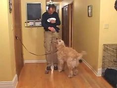 Train a dog not to jump on guests - YouTube