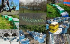 τα μελισσσια μας      μελισσοκομιο     μελισσοκομιο Stepping Stones, Outdoor Decor, Products, Home Decor, Interior Design, Home Interiors, Decoration Home, Gadget, Interior Decorating