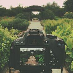 Canon Rebel T4I, Dslr, Garden, Path