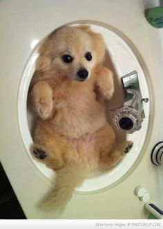 This pup is getting too big to be bathed in the sink!