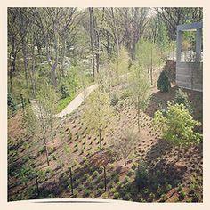 The still-growing vegetation outside Crystal Bridges Museum of American Art, Bentonville, Arkansas