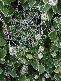 Astonishing Photographs of Spider Webs / Inspiration