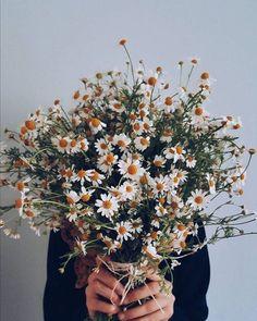 daisies bouquet, bouquet of daisy flowers, My Flower, Wild Flowers, Beautiful Flowers, Daisy Flowers, Unique Flowers, Flower Art, Beautiful Pictures, No Rain, Flower Aesthetic