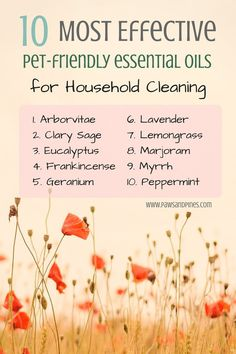 10 Most Effective Pet-Friendly Essential Oils for Household Cleaning (some EOs are TOXIC to pets :/ ) Essential Oils For Headaches, Essential Oils Cleaning, Essential Oil Diffuser Blends, Essential Oil Uses, Doterra Essential Oils, Antibacterial Essential Oils, Doterra Oil, Migraine, Oil For Headache