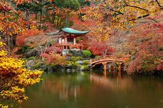 A Temple In Kyoto Blazing in Fall Color