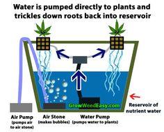 Top-fed DWC hydroponics (sometimes called bubbleponics) diagram. Source: http://growweedeasy.com/600w-dwc-cannabis-grow-journal