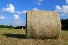 Bales of gold. And beautiful blue skies. It's a Texas summer!  Photo by Julie Vrazel Tomascik