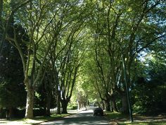Beautiful tree lined street in Vancouver
