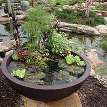 (8) Hometalk :: Container water gardens are a great way to get your feet wet with wate…
