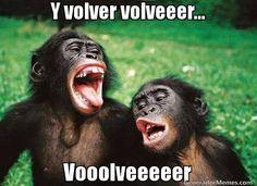Memes De Monos Los Mas Chistosos Divertidos Para Compartir Con Amigos Imagenes Divertidas De Cerv Memes De Monos Memes Chistosisimos Fotos De Monos Graciosos
