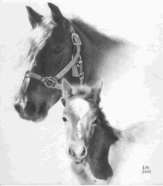 horsedrawing Beautiful pencil drawings of horses Beautiful Pencil Drawings, Sweet Drawings, Amazing Drawings, Horse Pencil Drawing, Horse Drawings, Animal Drawings, Pencil Art, Drawing Animals, Horse Sketch